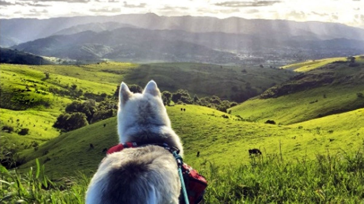 Best Dog Hikes In The Bay Area