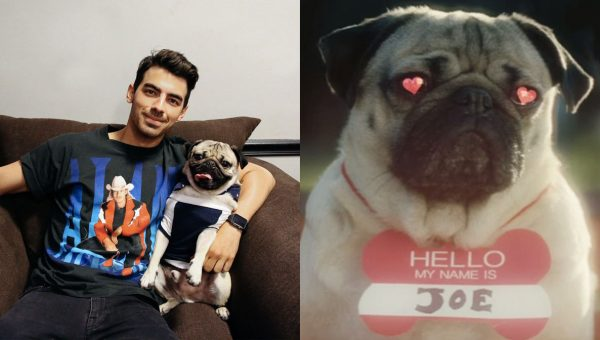Doug the Pug Stars as Joe Jonas in Hilarious Doggie Dating Music Video