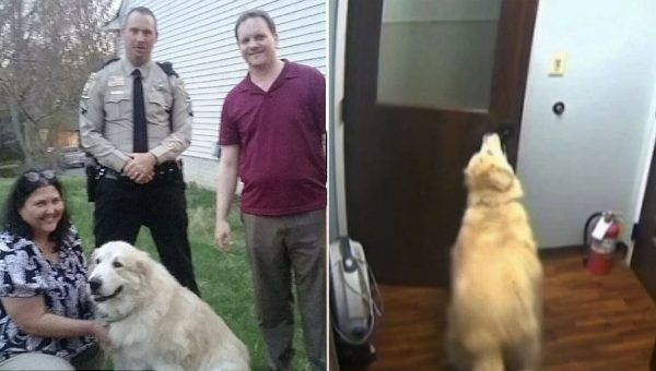 Impressive Great Pyrenees Caught on Camera Opening Three Doors to Sneak Out