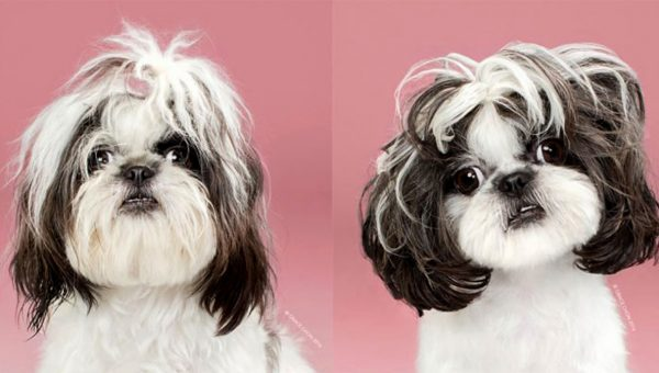 Adorable Dogs Before and After Their Haircuts