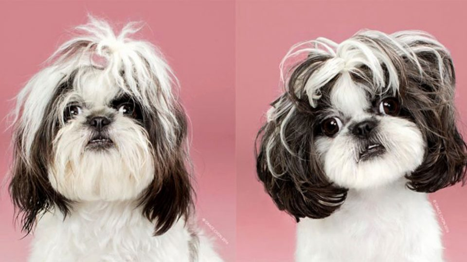 Adorable Dogs Before And After Their Haircuts The Dog People By