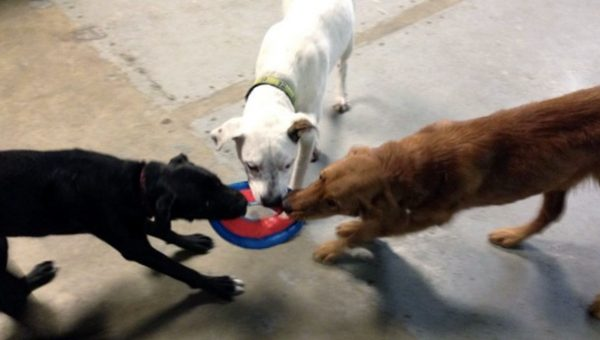 Seattle's Indoor Off-Leash Dog Parks: 6 Things to Know Before You Go