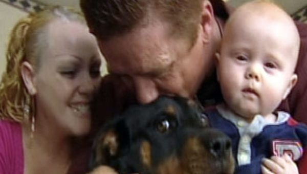 Dog Waits Two Weeks at Car Crash Site for Family's Return
