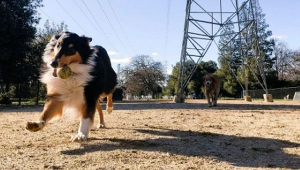 The Top 7 Dog Parks in San Jose, CA