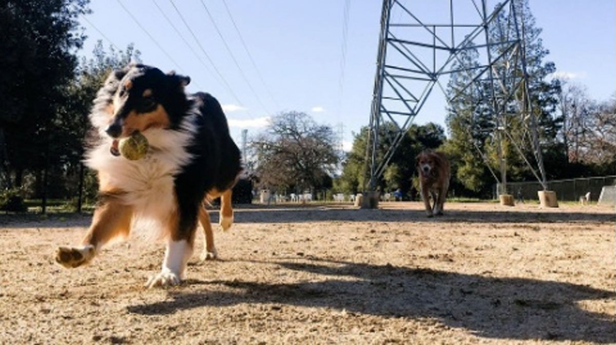 The Top 7 Dog Parks in San Jose, CA | The Dog People by Rover.com | Dog Training San Jose Ca