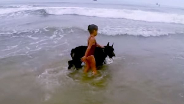 Protective Schnauzer Keeps Girl from Swimming, Dad Can't Stop Laughing [Video]