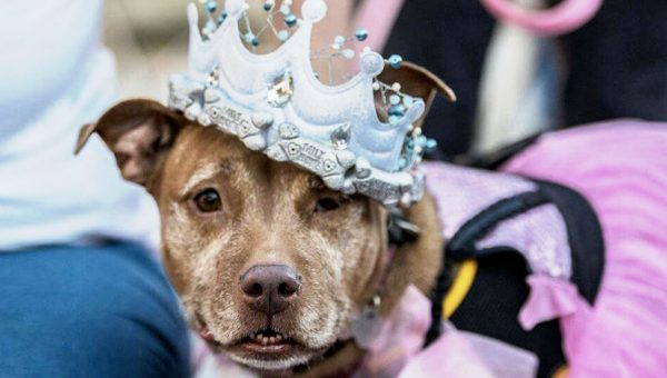 Seniors-Only 'Dog Prom' Helps Older Adoptable Dogs Find Families