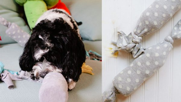 Easy DIY Dog Toy: The Water Bottle Crunch