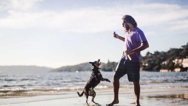 Top Dog Beach in Huntington Beach, California