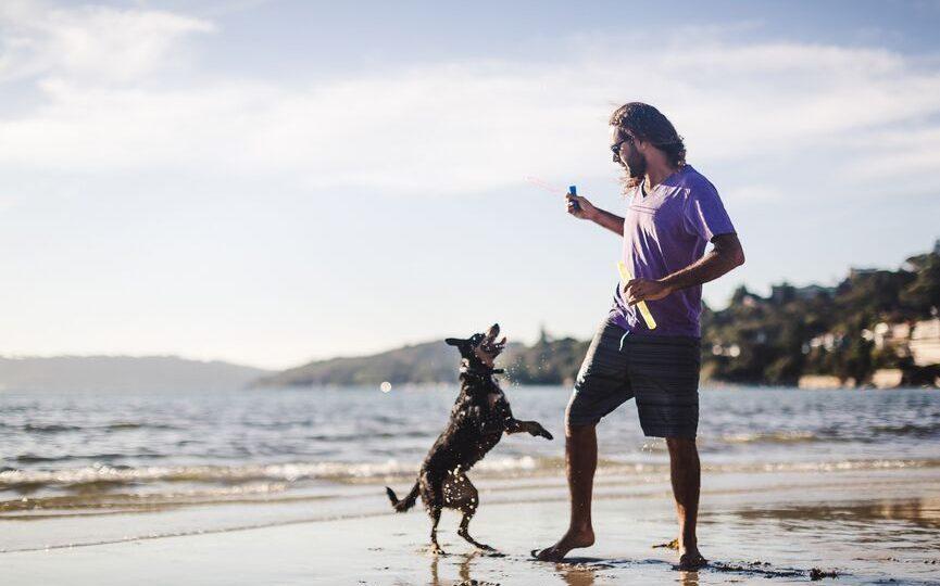 Dog Day Care Huntington Beach