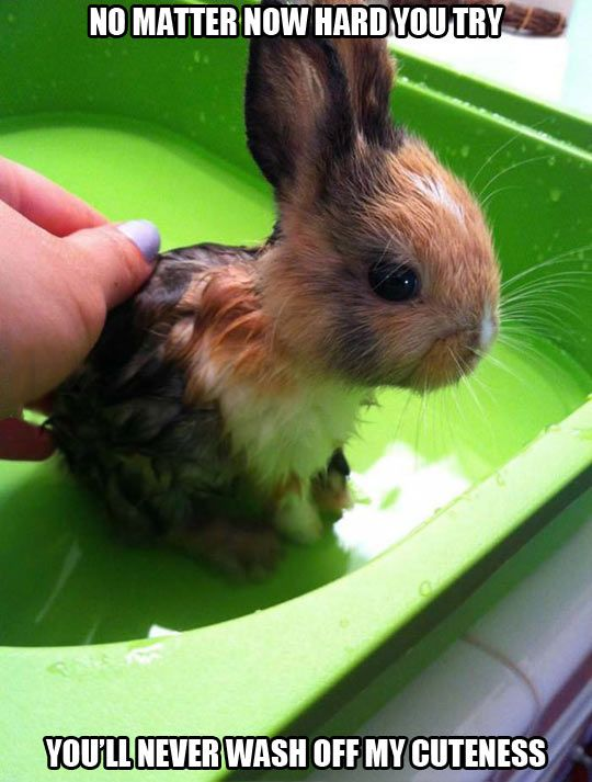 27 Bunnies That Will Cure Any Case of the Mondays | The Dog ...