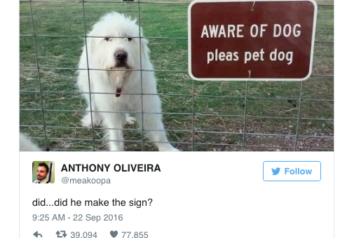 15 of the Best Dog Tweets Anywhere—Satisfaction Guaranteed