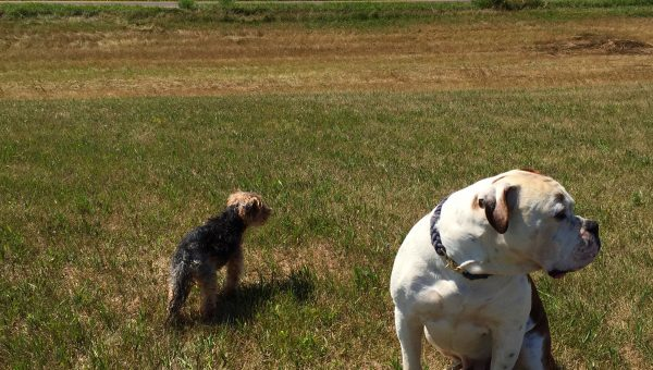 Top 5 Dog Parks in Sioux Falls, SD