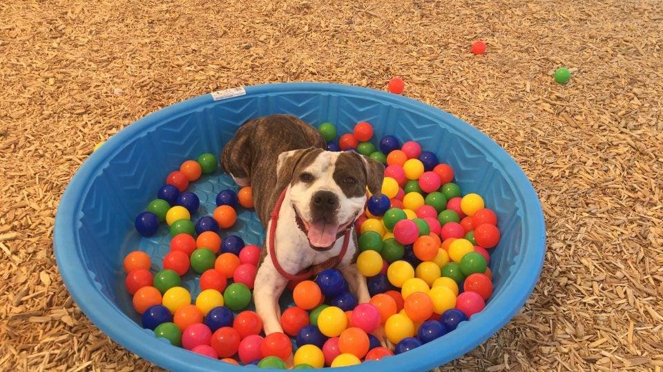 Dog Enrichment Toys Wow Blog