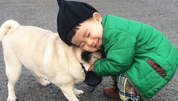 10 Small Dog Breeds That Are Great with Kids