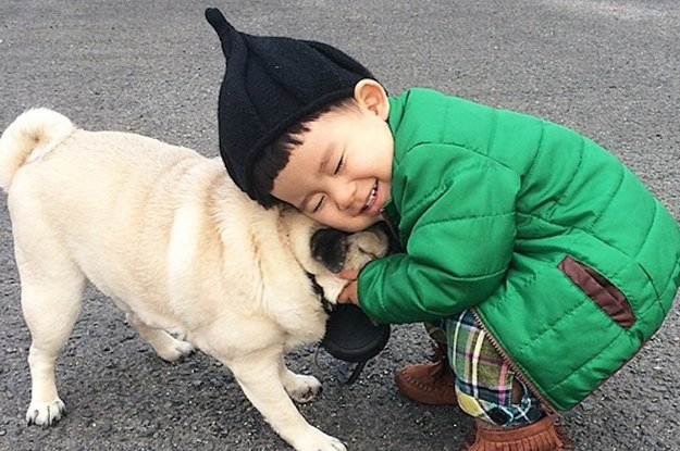 10 small dog breeds that are great with kids - Pictures Of Small Kids