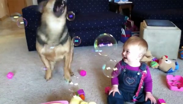 Baby Thinks Dog Catching Bubbles is Absolutely Hysterical [Video]