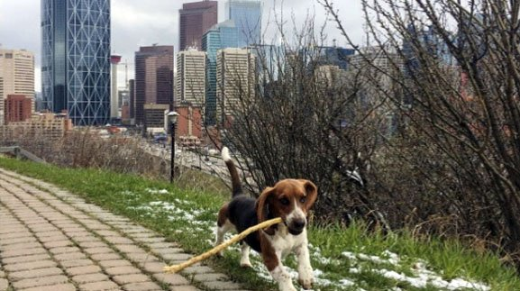 The Top 7 Calgary Dog Parks