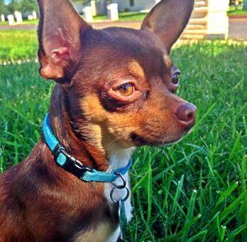 Top 5 Dog Parks in McAllen, TX