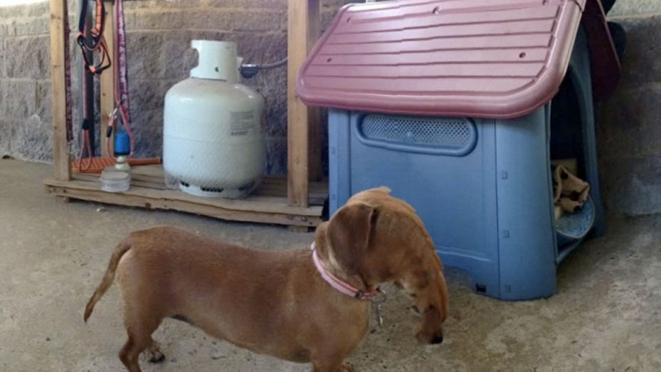 9 Dogs (and 1 Cat) Starring in Hilarious Panorama Photo ...