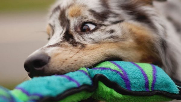 10 Best Plush Dog Toys That Your Dog Won't Destroy Immediately