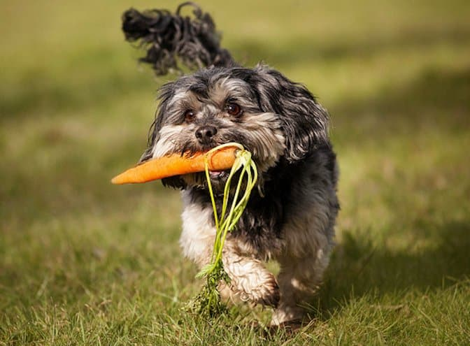 Vegetables Dogs Can Eat 11 Fruits And Veggies Good For Dogs