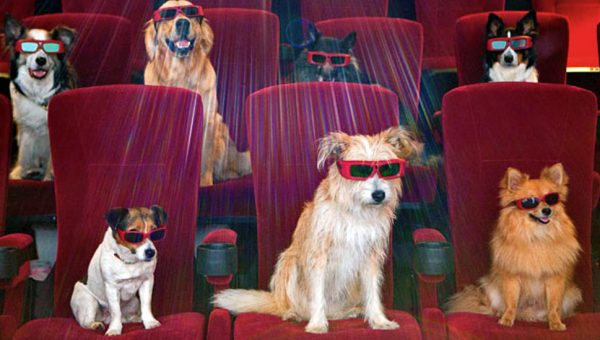 Top 16 Movies For Dog Lovers: Poll