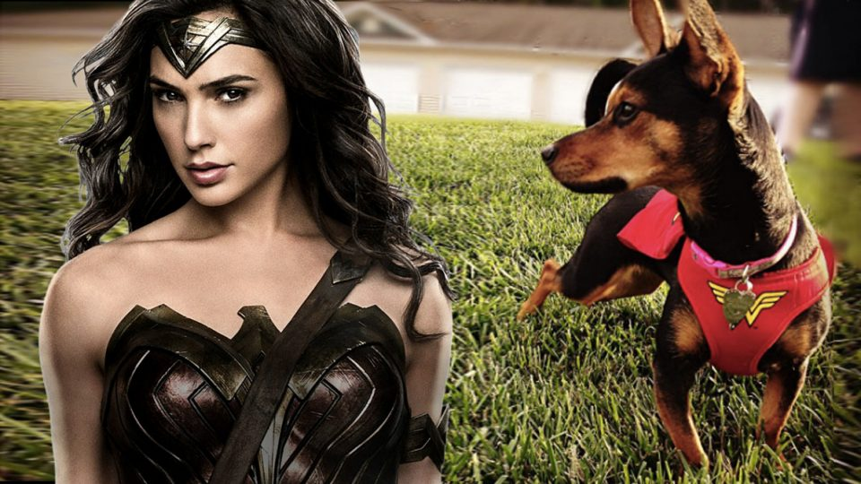 dogs-wonder-woman-960x540.jpg