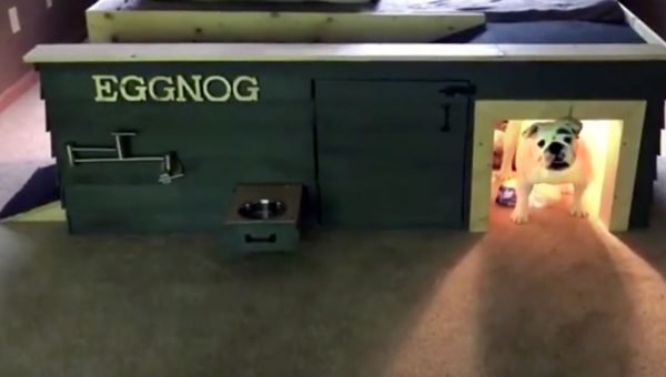 Eggnog the Bulldog Has the Coolest Custom Doghouse [Video]
