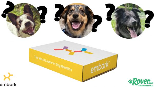 These Mixed Breed Dogs Each Took a DNA Test. Can You Guess the Results?