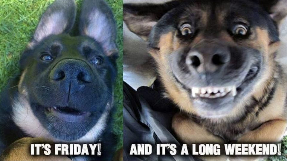 23 Totally Relatable German Shepherd Memes The Dog