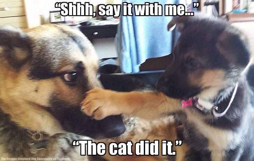 23 Totally Relatable German Shepherd Memes The Dog