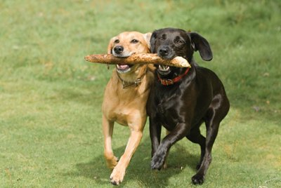 Top 10 Dog Parks in Overland Park, KS