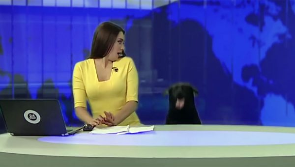 Russian Newscaster Hilariously Overwhelmed by Surprise Dog