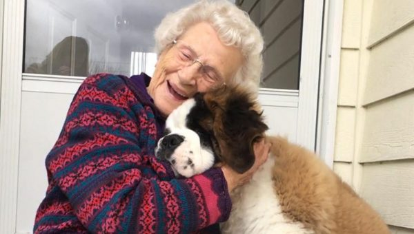 Saint Bernard Puppy and 93 Year-Old Neighbor Are the Best of Friends