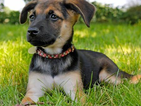 Top 7 Dog Parks in Madison, WI | The Dog People by Rover com