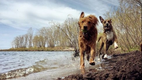 Top 6 Dog Parks in Toronto