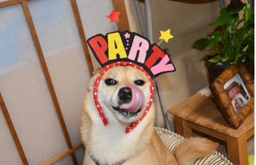 Dog Birthday Party Ideas We Are So Stealing for our Dogs