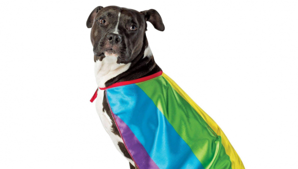 How to Dress Your Dog Like a Big Ol' Rainbow for Pride and Beyond