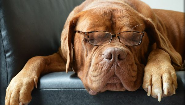 4 Ways to Test Your Dog's Intelligence