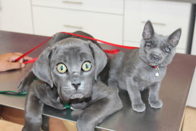 Face Swap Cat And Dog