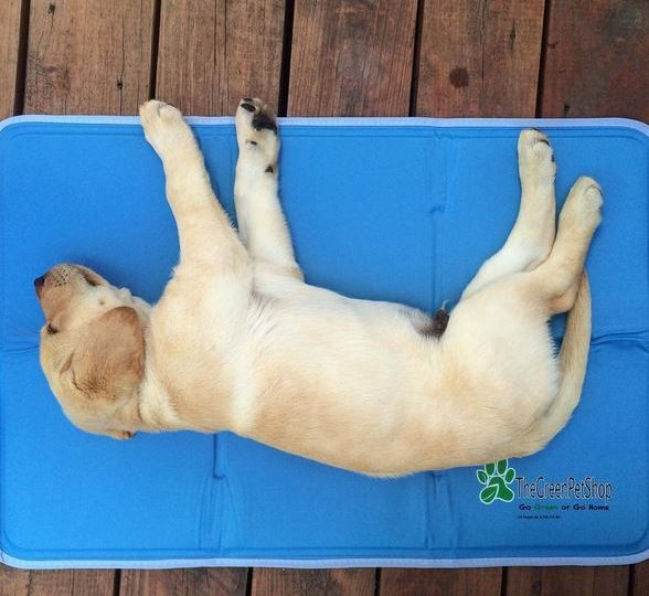 9 Best Cooling Beds for Your Hot Dog Rovercom