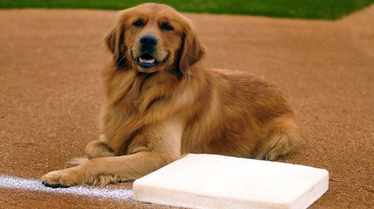 Who Carries Wellness Dog Food