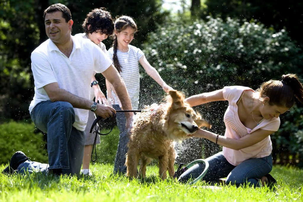De-skunking your dog isn't easy, as this family washing their dog outside is finding out.