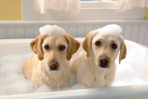10 Best Safe, Scented Dog Shampoos That Leave Your Dog Smelling Amazing