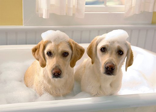 15 Best Smelling Dog Shampoos That Leave Your Dog Smelling Great