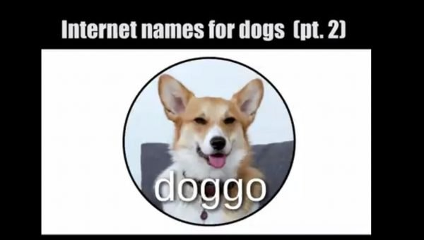 What's a Mlem? Popular Internet Dog Lingo Series Releases Second Video