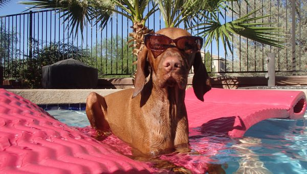 Should You Bring Your Dog On Your Honeymoon?