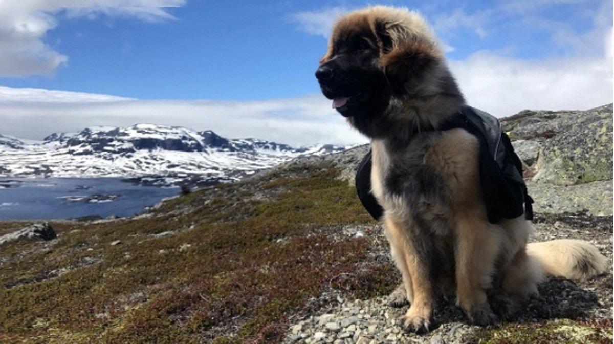 Leonberger Male Dog Names