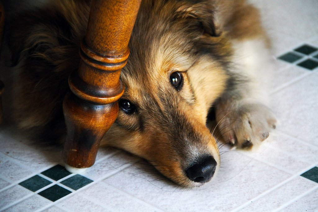 5 Behaviors That Make Dogs Nervous And What To Do Instead